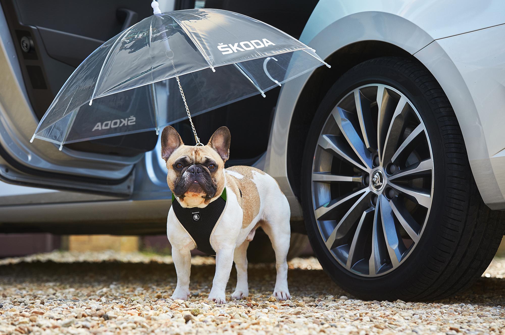 Pet Car Hammock >> Skoda reveals DOG Umbrella option for the Superb | Cars UK