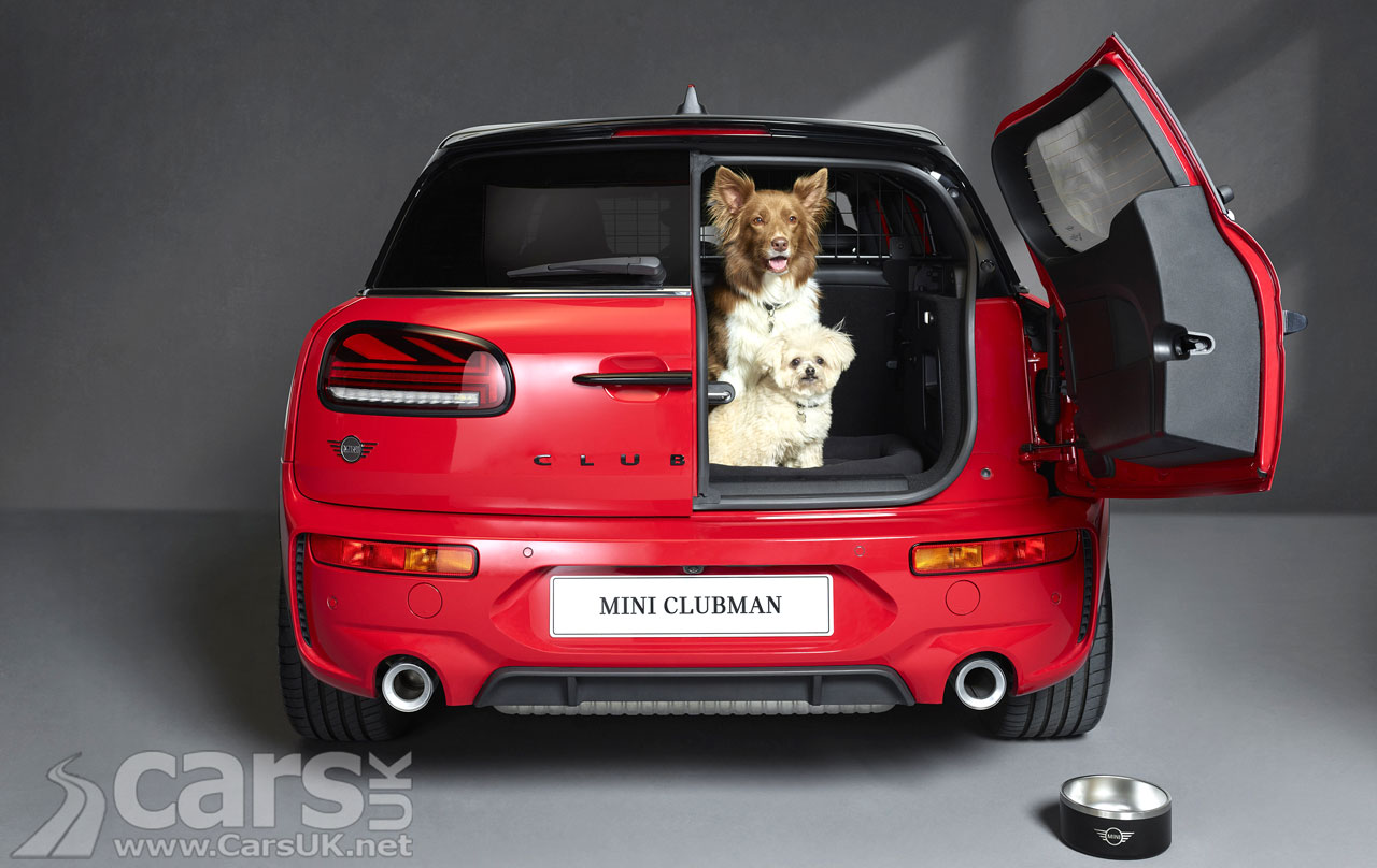 Photo Photo dogs in the boot of a MINI